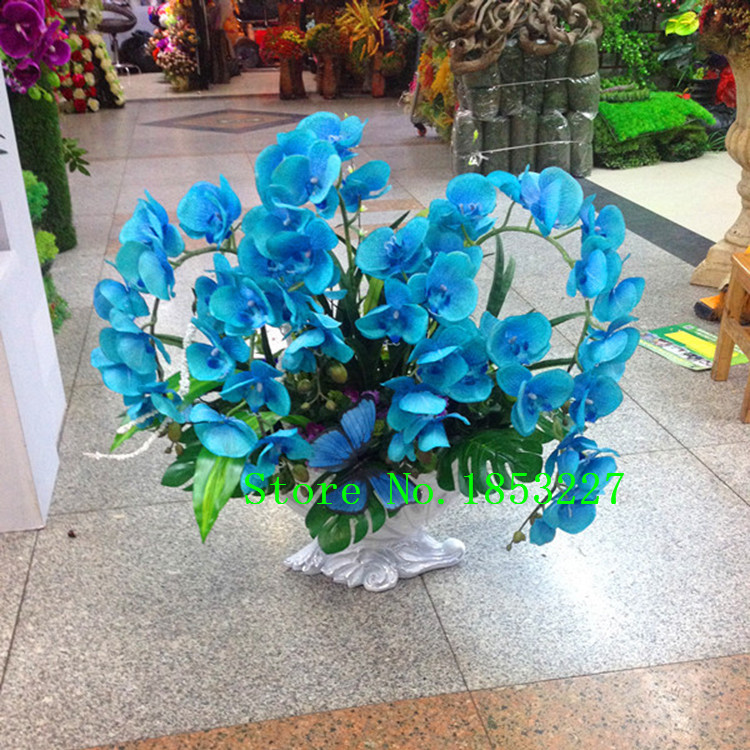Rare Orchid Bonsai Balcony Flower Blue Butterfly Orchid Seeds Beautiful Garden Phalaenopsis Orchids Seeds -200 PCS