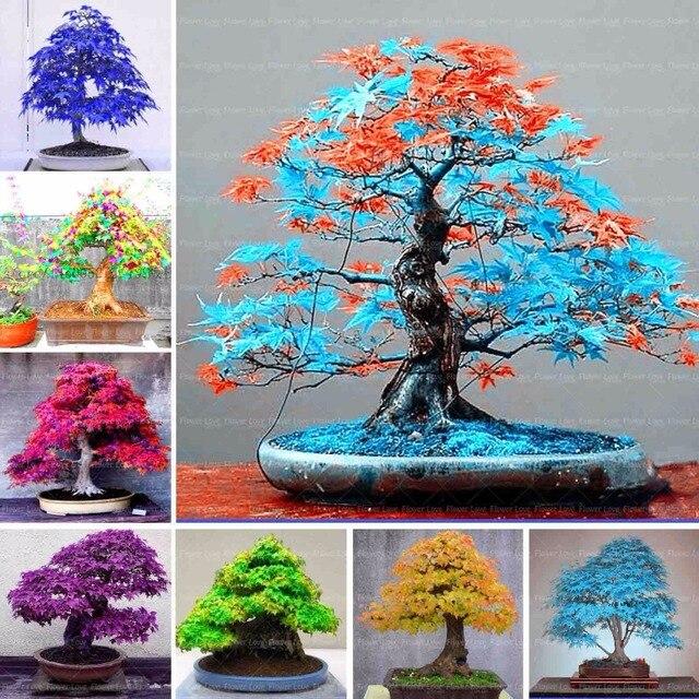 Plantes pour jardin japonais great plantes pour jardin - Arbre pour jardin japonais ...