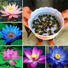 10pcs/pack bowl lotus hydroponic plants aquatic flower pot water lily Bonsai Garden