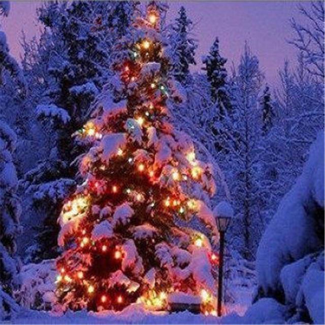 Weihnachtsbaum Samen.10 Samen Topfblumen Zeder Samen Weihnachtsbaum Balkon Bonsai Pflanzen Für Garten Hause Vier Seasons Pflanzung Einfach Zu Wachsen In 10 Samen
