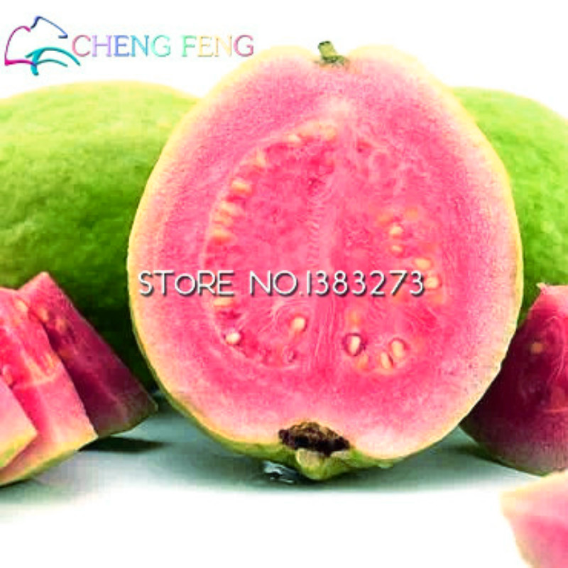 2018 New Home Garden Plant Sweet Red Guava Seeds Thai Pink