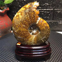 mineral crystals fossilized snail ammonite mineral natural stones for fengshui decoration