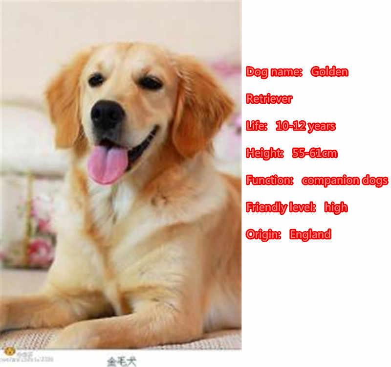 2019 Golden Retriever perro Animal oro plata monedero Metal colgante llavero para el coche mujeres hombres llavero amor joyería k046