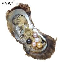2018 High Quality Vacuum Pack Oyster Akoya Pearl 8 9mm Pearl Oysters Single Bowling Individually Packaged