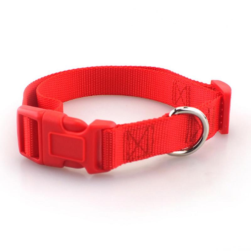 Collar de perro clásico 4