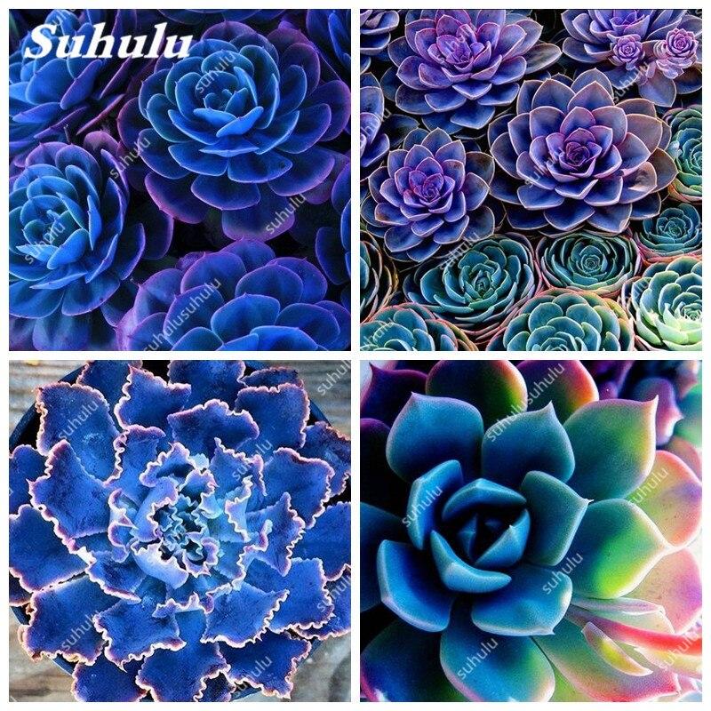 100 Pcs Succulents Seeds Mini Cactus Seeds Indoor flower seeds perennial garden ornaments Semillas De Flores
