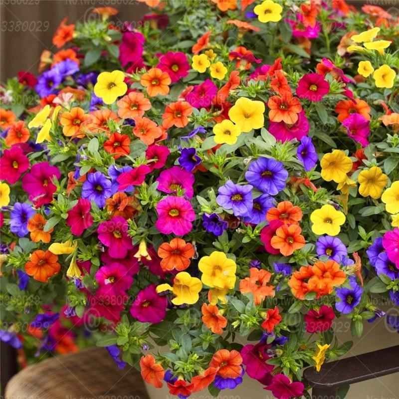 Promoci-n-300-unids-piezas-colgante-Petunia-mixto-bons-i-20-ondas-de-Color-amable -