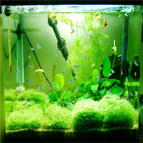 Online Get Cheap Aquarium Grasses Aliexpresscom Alibaba Group