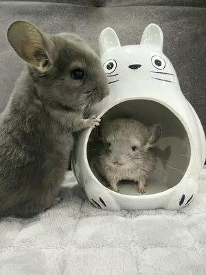 Дракон кошка керамическое гнездо негабаритных Ежик кролик демон король Лето охлаждение лед дом крутая комната керамическая шиншилла кролик