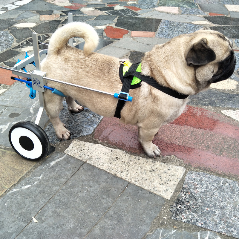 US $68 0 |Adjusted Paralyzed Pet Wheelchair Aluminum Stainless Steel dog  Scooter Professional Training Wheelchair for Disabled Dog CW017-in Dog