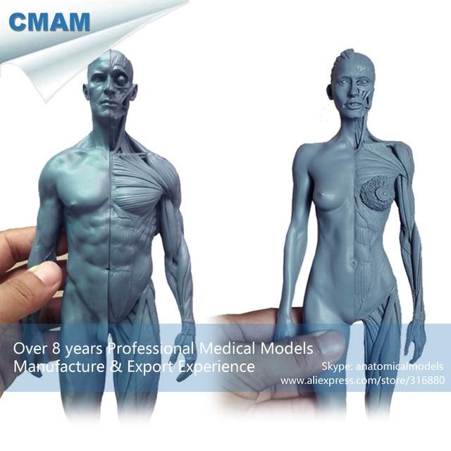 CMAM PRC18 1:6 Grau Harz Menschlichen Körper Anatomie Lehrmodell ...