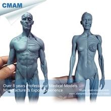 CMAM-PRC18 1:6 Gray Resin Human Body Anatomy Teaching Model Male + Female 30cm