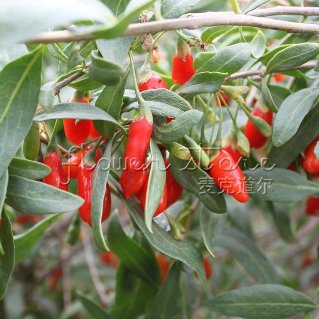 ягоды годжи доставка из Китая