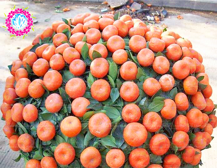 20 Bansai Orange Seeds fragrant flower seeds for home garden planting bonsai tree seeds outdoor plant healthy food