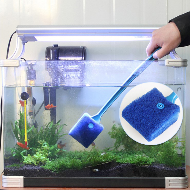 how to keep a fish tank clean of algae