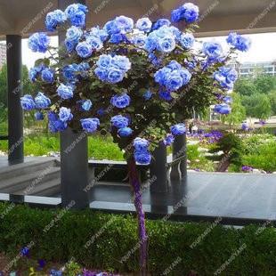 arbre bleu fleurs-achetez des lots à petit prix arbre bleu fleurs