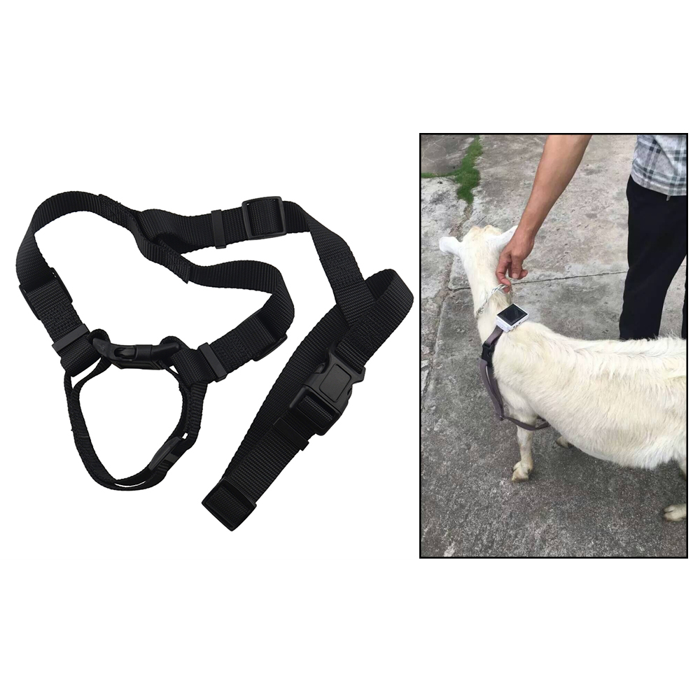 FREE GIFT Cattle Solar Tracker 5000 3G Animal Camel Cow Collar GPS
