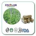 Alta Calidad de Forskolina Extracto De Coleus Forskohlii 500 mg * 100 unids/lot Envío Libre