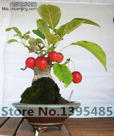 20pcs/bag, Balcony patio potted fruit trees planted seeds, kumquat seeds, orange seeds, tangerine, citrus,