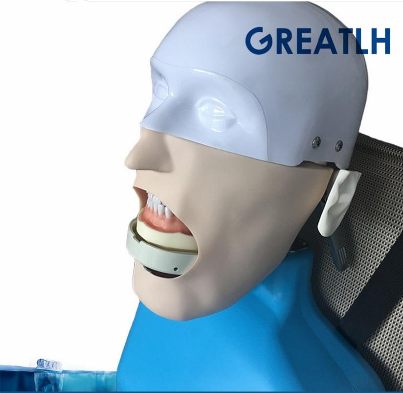 Dental manikins Phantom Head for dentistry and dental technology Sennior manikins Phantom Head with Torso ultrasonography in dentistry