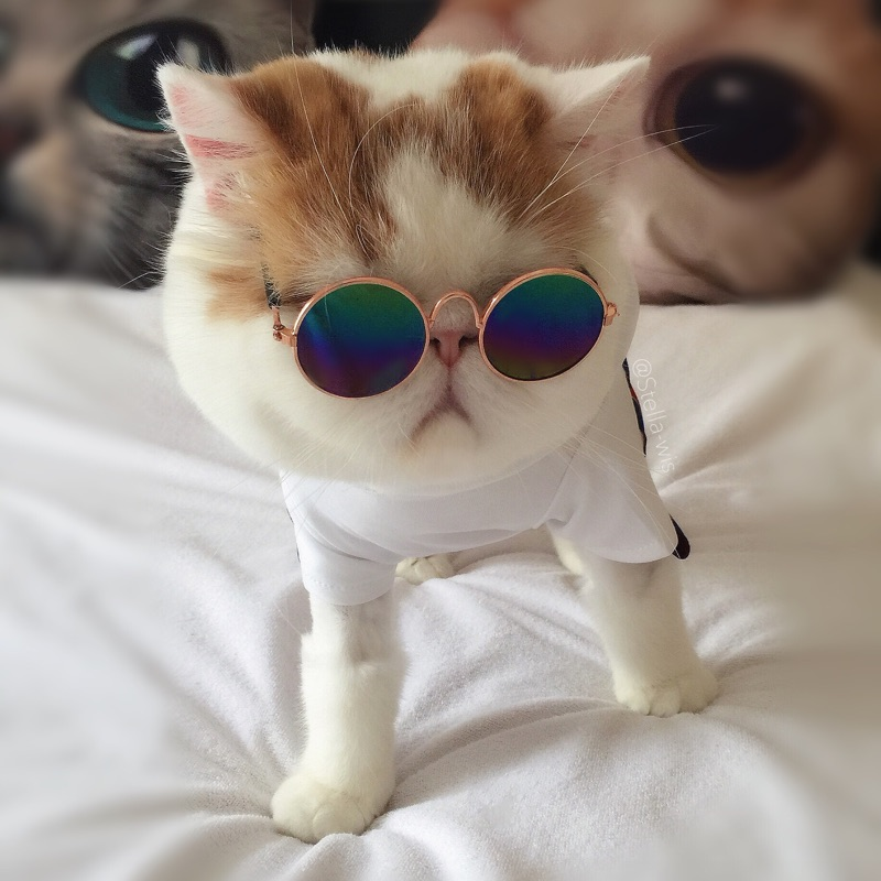 Uv Sunglasses Cats Glasses Fashion Cute Accessories Products For Little Medium Small Breeds Animals Pet Dog Puppies Grooming