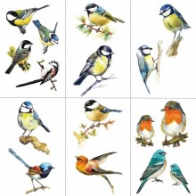 WYUEN Colorful Birds Women Temporary Tattoo Sticker Tattoos for Waterproof Fashion Body Art Kids Hand Fake Tatoo 10.5X6cm A-185