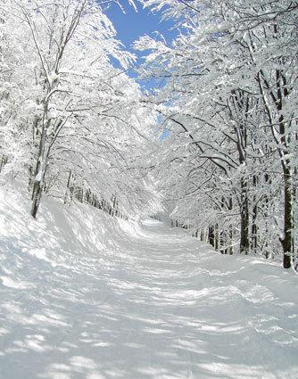 8x15FT Photography Studio Backdrop Background Customize Snowy Forest Road Sunshine Sky Winter Digital Printing Vinyl 10x12