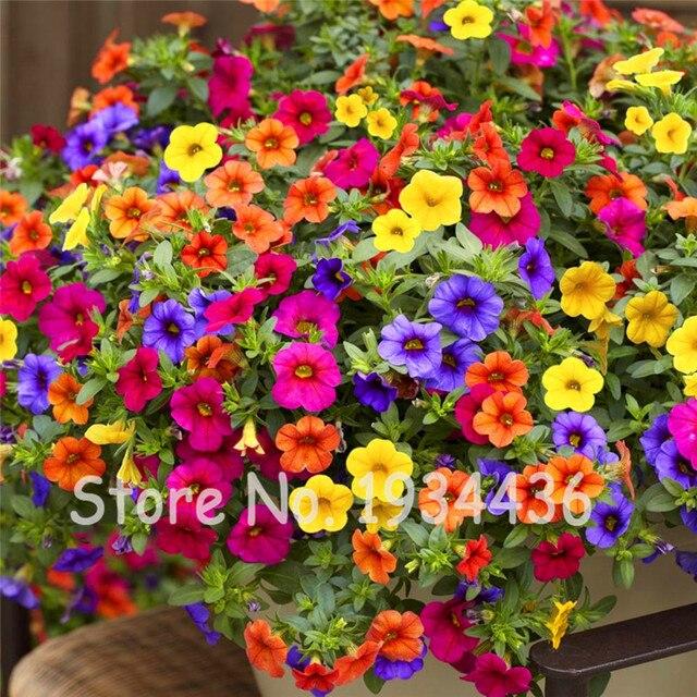 ¡Promoción! 300 piezas colgantes Petunia mezclado bonsái 20 ondas hermosas flores de colores interiores para decoración de plantas de jardín del hogar