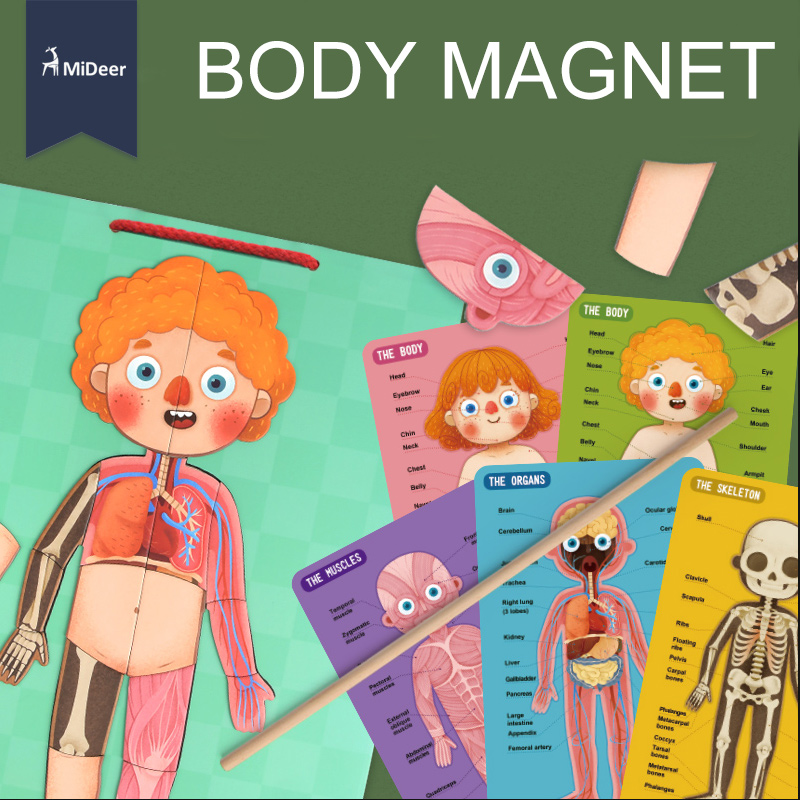 MiDeer tarjetas de conocimiento del cuerpo imán puzle divertida biología ciencia educación juguetes de aprendizaje temprano para niños Regalo de Cumpleaños MD2031