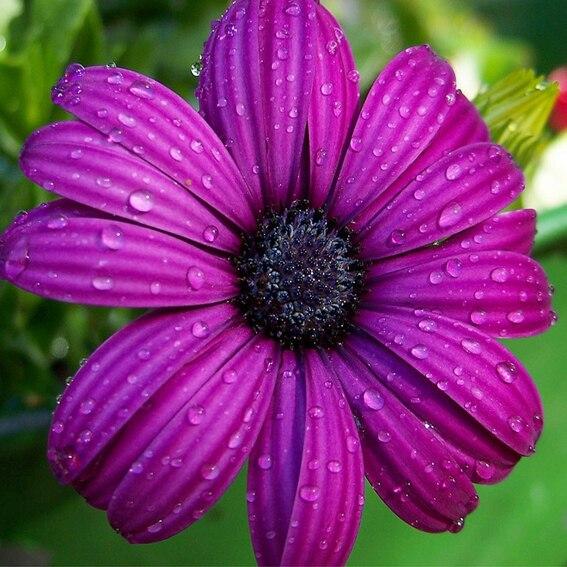 Immagini Fiori Viola.Ricamo Artigianato Fiori Viola Pittura Diamante 5d Mosaico