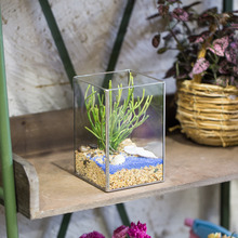 NCYP 6″ Rectangular Geometric Open Fern Moss Succulent Plants Glass Terrarium Balcony Display Planter Garden Pot Box for Present