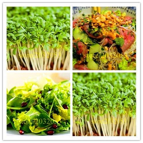 1000 salad seeds NO-GMO lettuce vegetable seeds for home garden ,best nutrition for dinner kids love vegetable