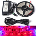 Full spectrum LED Grow light DC12V 1/5M 5 red 1 blue Waterproof LED strip lamp for greenhouse plant Hydroponics + power adapter