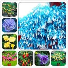 BONSAI 100pcs Mandala Brugmansia Datura Rare Flower Potted Plants Mixed Color Garden Decoration Bonsai Plant