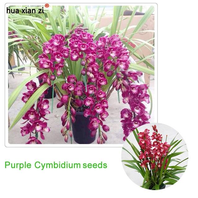 Cymbidium Orchid Asian Corsage Pink Perfection