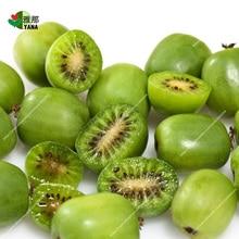 200pcs/bag mini Arguta kiwi ,kiwi tree, fruit ,for miniature garden,Arguta kiwi plant for home garden seeds цены онлайн