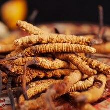 5 шт. из чистого натурального Кордицепса Синенсис из Тибета, Китай