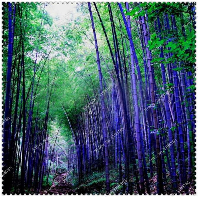 online cheap purple bamboo