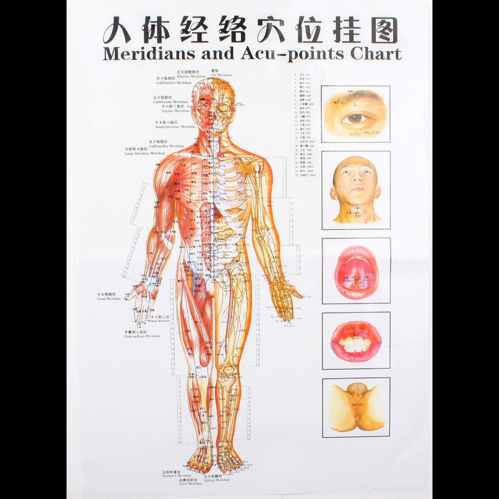 Waterproof chart of meridian acupuncture point health therapy ...