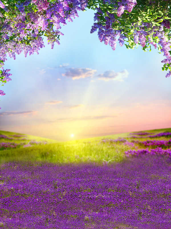SZZWY 12x8ft Morning Misty Forest Scenic Backdrop Vinyl Sunshine Light Beams Go Through The Lush Wood Purple Flowers Field Background Nature Scenery Landscape Birthday Party Banner Kids Shoot
