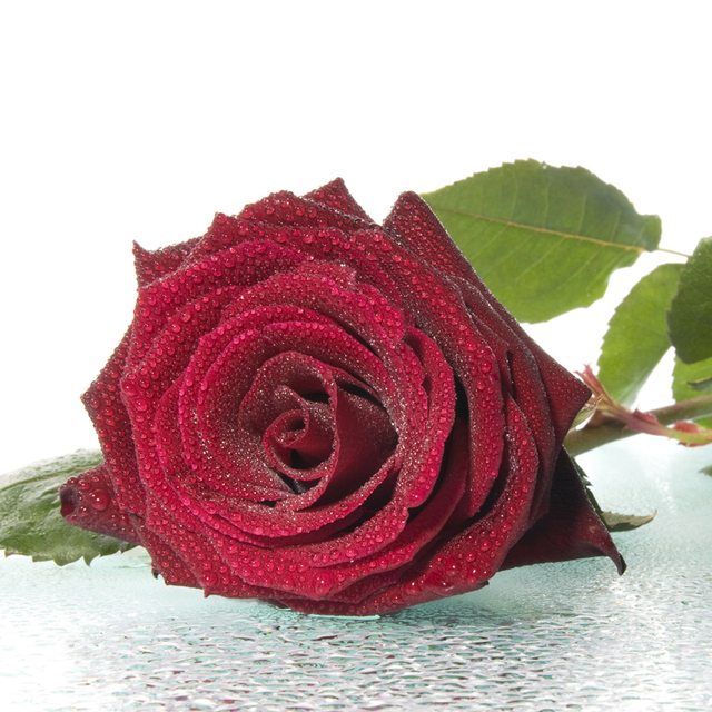 150 Unids Chino Flor Rosas Rojas Semillas De Flores Jardín De Diy