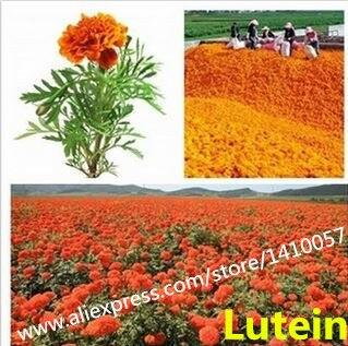naturel lutine 20 naturel qualit alimentaire poudre de colorant naturel fleur de souci extrait additifs - Colorant Naturel Alimentaire