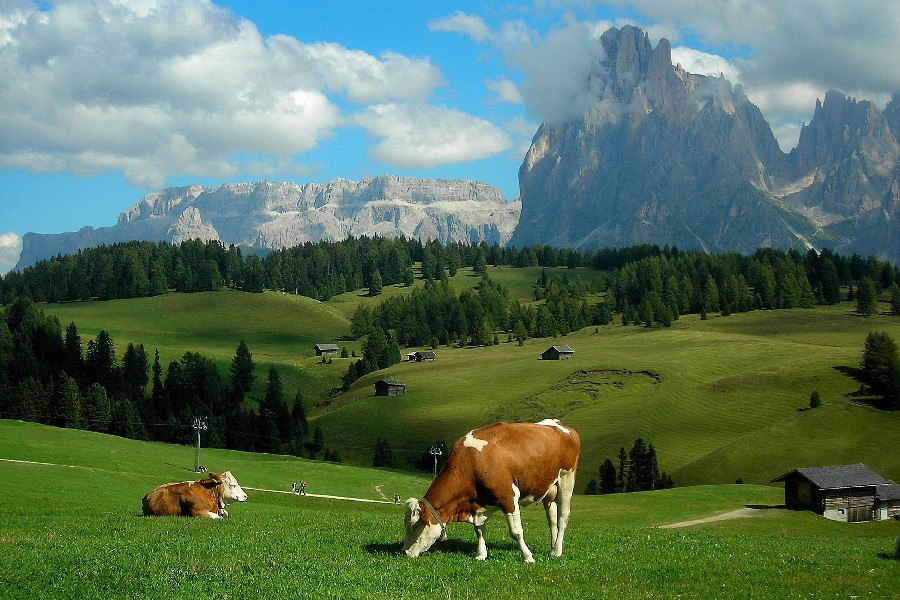 Image result for farm scenery
