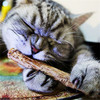 5PCS Cat Cleaning Teeth Pure Natural Catnip Pet Cat Molar Toothpaste Stick Silvervine Actinidia Fruit Matatabi Cat Snacks Sticks
