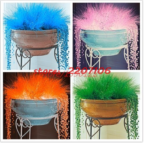 200pcs/bag Decorative grass seeds blue green red pink purple azury 6 colour bonsai grass seeds potted plant for home & garden