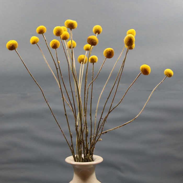 Artificial Plants 5pcs Dried Craspedia Yellow Billy Balls Dried