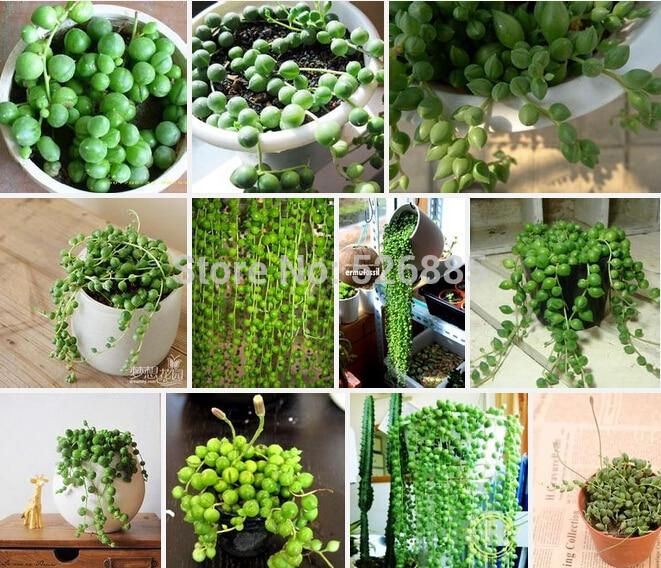 popular spider plant bloom buy cheap spider plant bloom. Black Bedroom Furniture Sets. Home Design Ideas