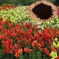 1000 Unidades/pacote Comum Antirrhinum Snapdragon Sementes de Flores Em Vasos de Plantas Perene Flor Sementes Para Casa Jardim