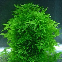 1bag=200pcs rare flower seeds mini aquarium grass seeds tank underwater aquatic plant seeds easy plant seeds home & garden gift