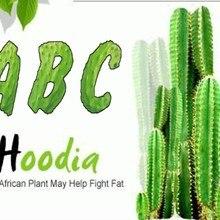 Подавление аппетита кактус HOODIA GORDONII экстракты 20:1 пищевые добавки сжигатель жира живота